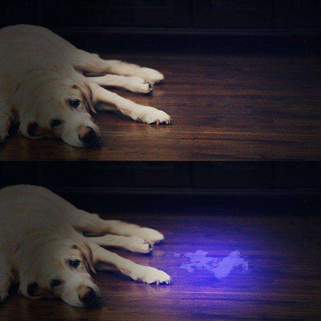 UVFlashlight